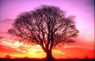 El árbol amigo
