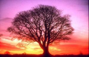 El amor desinteresado de un árbol; se puede dar también en una persona.
